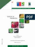 PRODUCCION FRAMBUESA