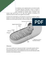 1 Mitocondrias.docx