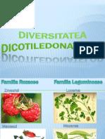 Diversitatea angiospermelor.pptx