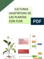 Las estructuras vegetativas plantas con flor