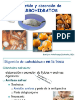 clase-digestion-y-absorcion-de-carbohidratos.pdf