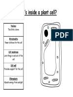Animal and Plant Cell Diagram