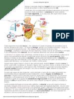 L'Anatomia Dell'Apparato Digerente