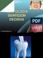 molares deciduas 2017