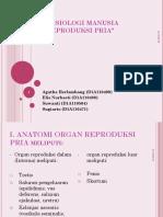306119045-Sistem-reproduksi-pria-ppt.ppt
