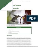 How cells obtain energy.en.es.pdf