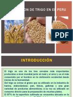 Produccion de Trigo en El Peru