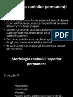 Curs IV Morfo 2017-2018