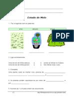 Estudo Do Meio_Plantas