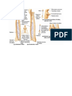 Proximal Lateral View