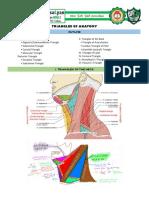 Triangles of Anatomy