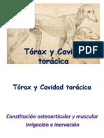 Torax y Organos Intratoracicos
