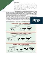 Calendario de Vacunación en Aves