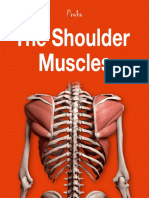 The Shoulder Muscles eBook