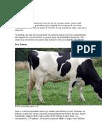 Bovine Lapte
