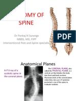anatomia coluna