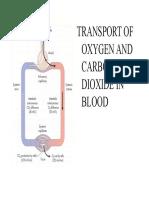 O2_AND_CO2.pdf
