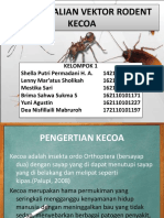 Ppt Kecoa New