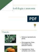 Flor Morfologia e Anatomia 1225977331490095 9