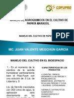 MANEJO-DEL-CULTIVO-DE-PAPAYA.ppt