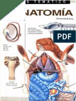 Atlas Temático de Anatomía Animal-FREELIBROS.ORG.pdf