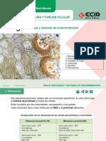 3ra Sistema de Endomembranas 1 (4)