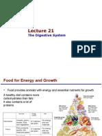21 Digestive
