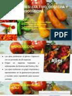 ajies-pdf