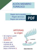 IRRIGACIÓN MIEMBRO TORÁCICO