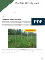 Cabe Keriting Lebat Di Tanah Binjai Bpk Hendra Langkat 2014