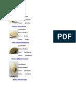 248406249-fosil-moluska.docx
