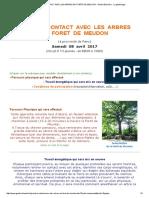Prendre Contact Avec Les Arbres en Forêt de Meudon - Géobio Bien Être - La Géobiologie