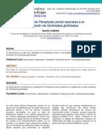 Pelophylax Gryllotalpa