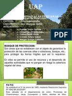 BOSQUES DE PROTECCION.pptx