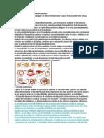Principales Fases Del Desarrollo Intrauterino