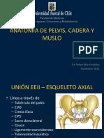 Anatomía Cadera y Pelvis