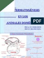 La Espermatogénesis