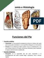 Anatomia Del Pie-2