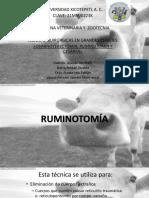 Ruminotomía Cesarea Ovh