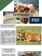 TARENTAISE