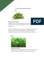 239437244 5 Sayuran Yang Dimanfaatkan Daunnya Docx