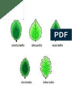 20 Tipos de Hojas y Sus Nombres Cientificos (Imagenes)