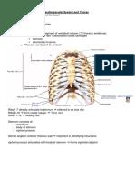Anatomy of the CVS