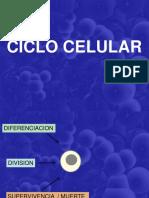Ciclo Celular - Biocell