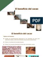 El Beneficio Del Cacao
