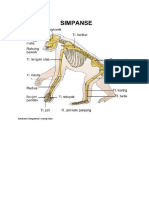 Anatomi Simpanse Atau Orangutan