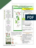 Las Plantas Tabla Dibujada Con Lapiz