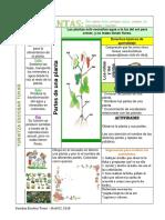 Las-plantas-tabla-Dibujada-Con-Lapiz.docx