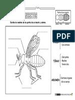 Animales-invertebrados-partes-de-un-insecto.pdf