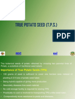6.True Potato Seed_0